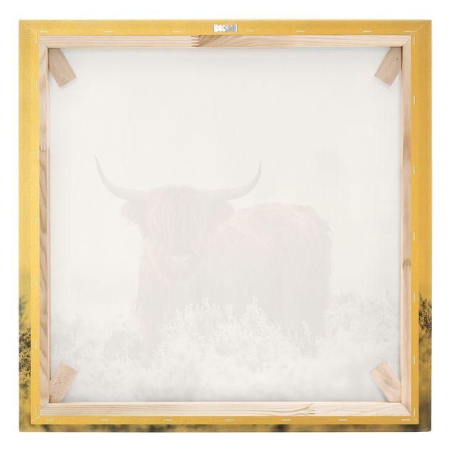 Leinwandbild Gold - Bison in den Highlands - Quadrat 1:1