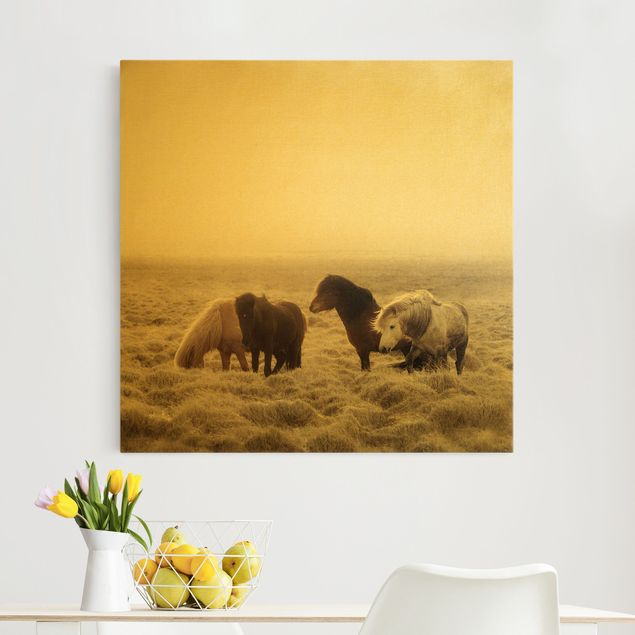 Leinwandbild Gold - Island Wildpferde - Quadrat 1:1
