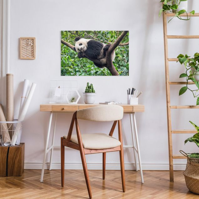 Leinwandbild - Schlafender Panda auf Ast - Querformat 3:2