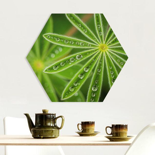 Hexagon Bild Forex - Morgentau auf Lupinenblättern
