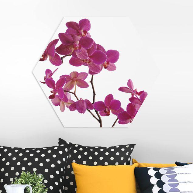 Hexagon Bild Forex - No.SB57 Orchidee I
