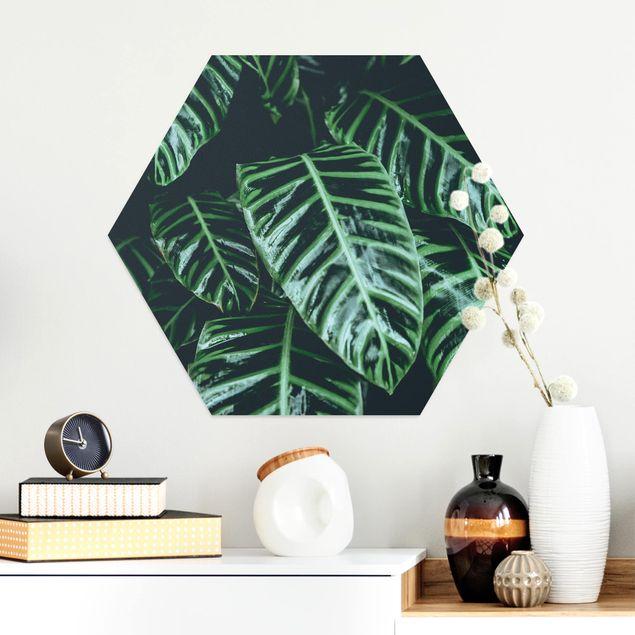 Hexagon Bild Alu-Dibond - Tropische Pflanzen IV