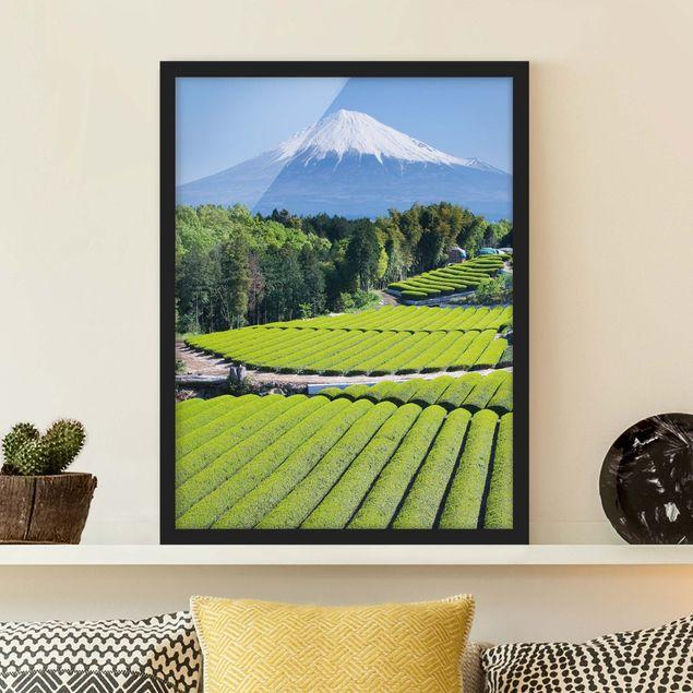 Bild mit Rahmen - Teefelder vor dem Fuji - Hochformat 3:4