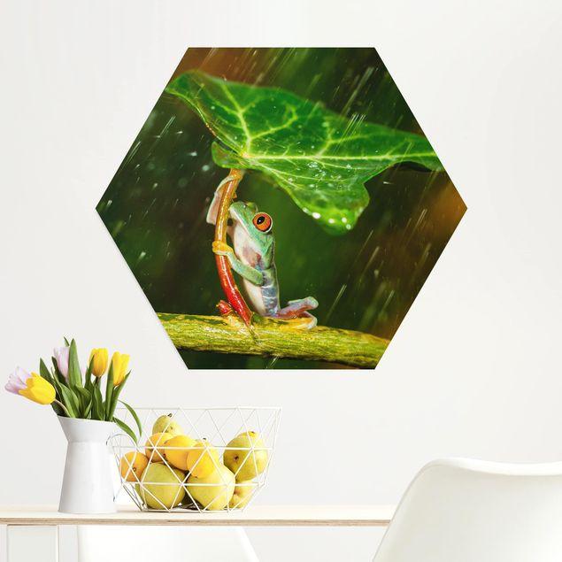 Hexagon Bild Alu-Dibond - Ein Frosch im Regen