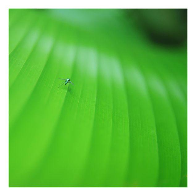 Glas Spritzschutz - Metal Mosquito - Quadrat - 1:1