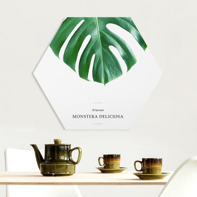 Hexagon Bild Forex - Tropisches Blatt Monstera