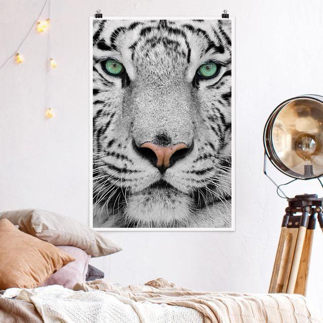 Poster - Weißer Tiger - Hochformat 3:2