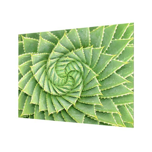 Glas Spritzschutz - Spiral Aloe - Querformat - 4:3