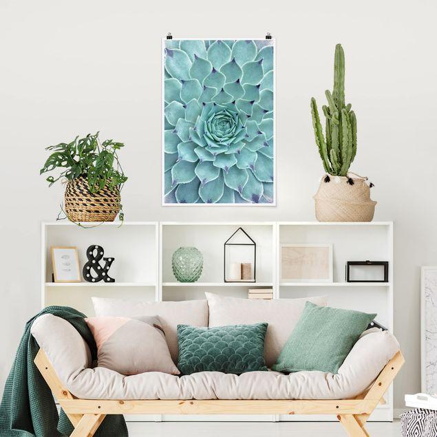 Poster - Kaktus Agave - Hochformat 3:2
