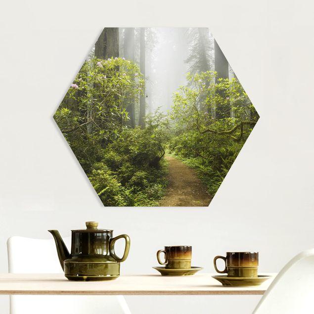 Hexagon Bild Forex - Nebliger Waldpfad