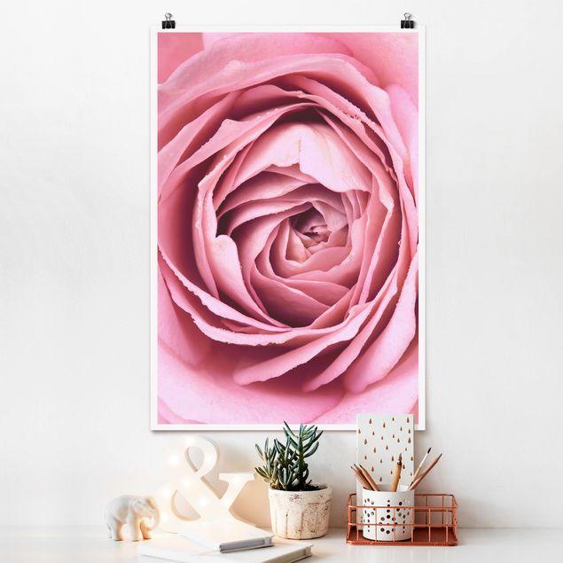 Poster - Rosa Rosenblüte - Hochformat 3:2