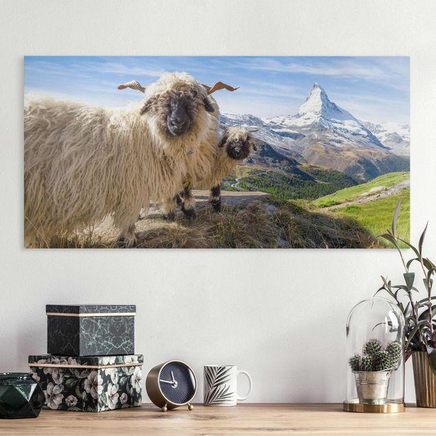 Leinwandbild - Schwarznasenschafe von Zermatt - Querformat 2:1