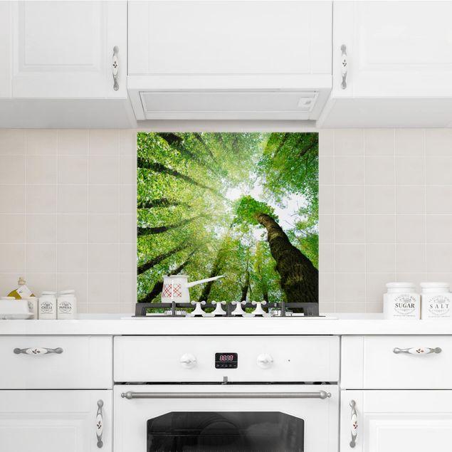 Glas Spritzschutz - Bäume des Lebens - Quadrat - 1:1