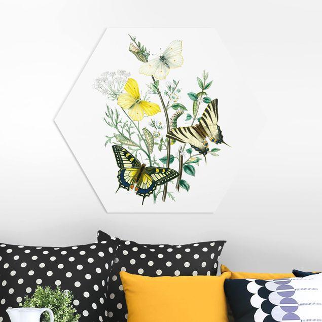 Hexagon Bild Forex - Britische Schmetterlinge III