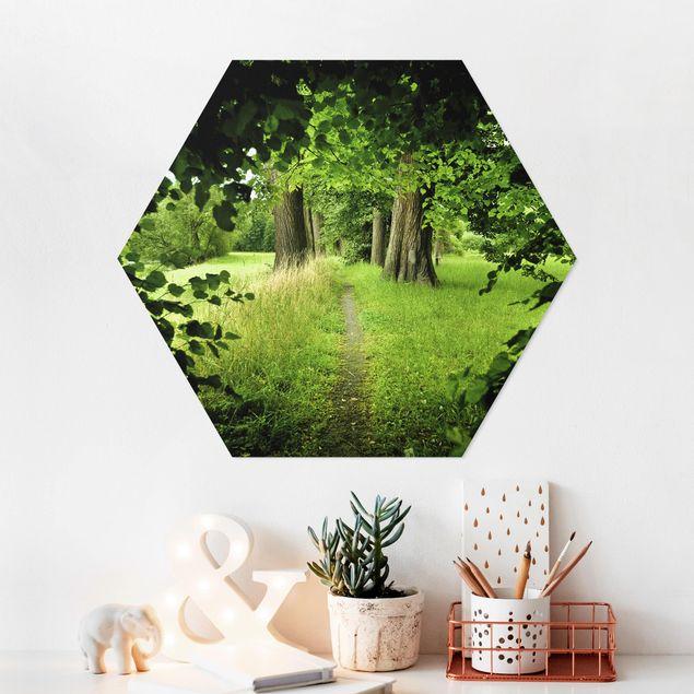 Hexagon Bild Forex - Verborgene Lichtung