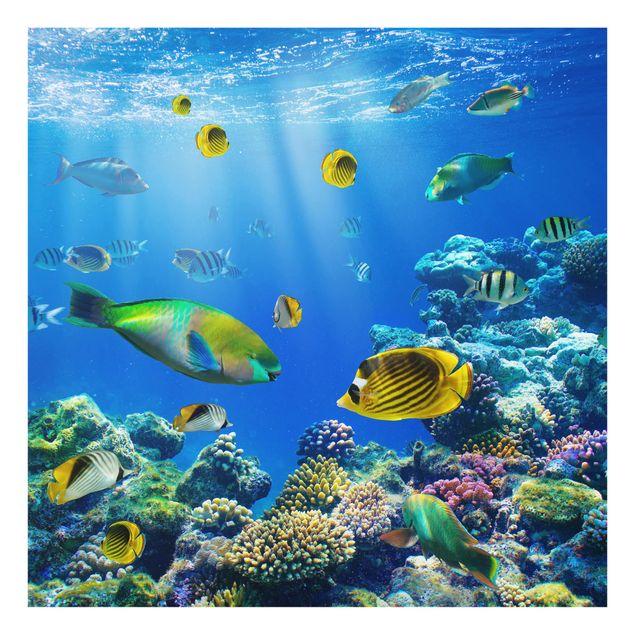 Glas Spritzschutz - Underwater Lights - Quadrat - 1:1