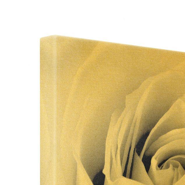Leinwandbild Gold - Close Up Rose - Quadrat 1:1