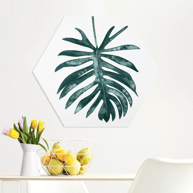 Hexagon Bild Forex - Smaragdgrüner Philodendron Angustisectum