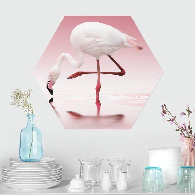 Hexagon Bild Forex - Flamingo Dance