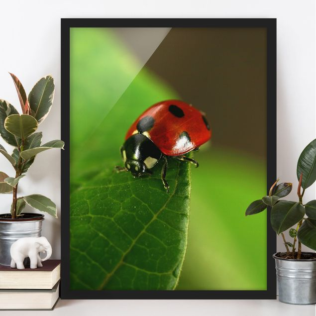 Bild mit Rahmen - Lady Bird - Hochformat 3:4