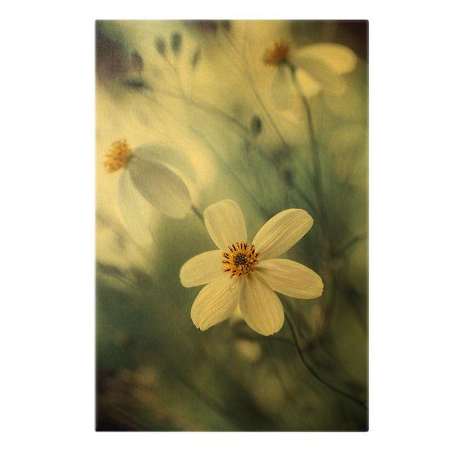 Leinwandbild Gold - Kosmeen in Pastell - Hochformat 2:3
