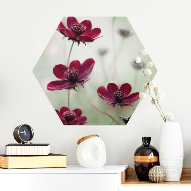 Hexagon Bild Alu-Dibond - Pinke Kosmeen