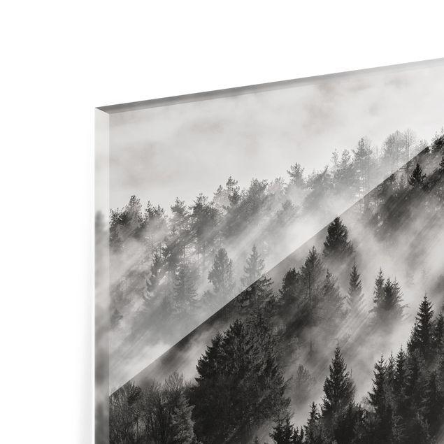 Glas Spritzschutz - Lichtstrahlen im Nadelwald - Querformat - 4:3