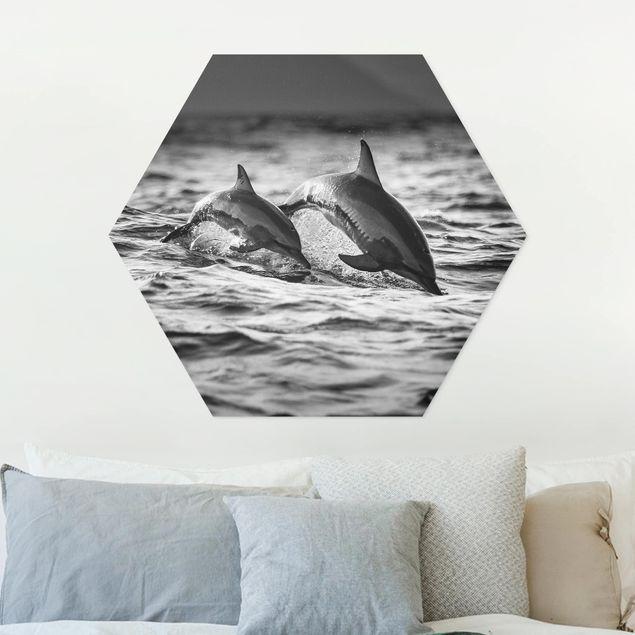 Hexagon Bild Forex - Zwei springende Delfine