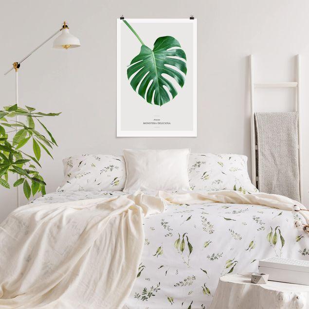Poster - Tropisches Blatt Monstera - Hochformat 3:2