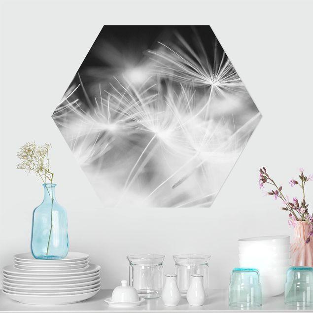 Hexagon Bild Forex - Bewegte Pusteblumen Nahaufnahme auf schwarzem Hintergrund