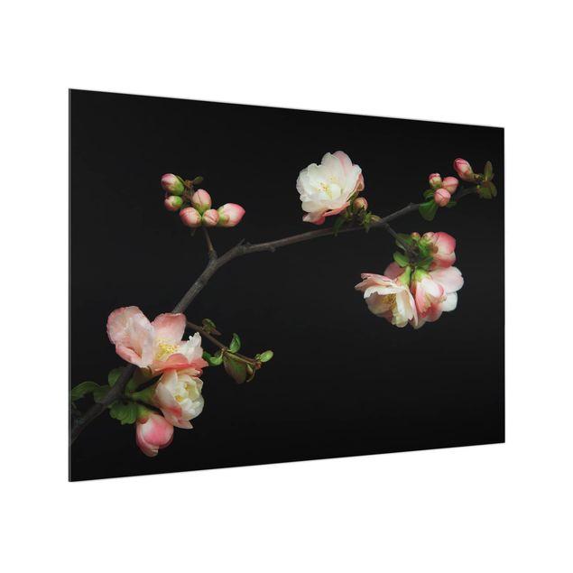Glas Spritzschutz - Blütenzweig Apfelbaum - Querformat - 4:3