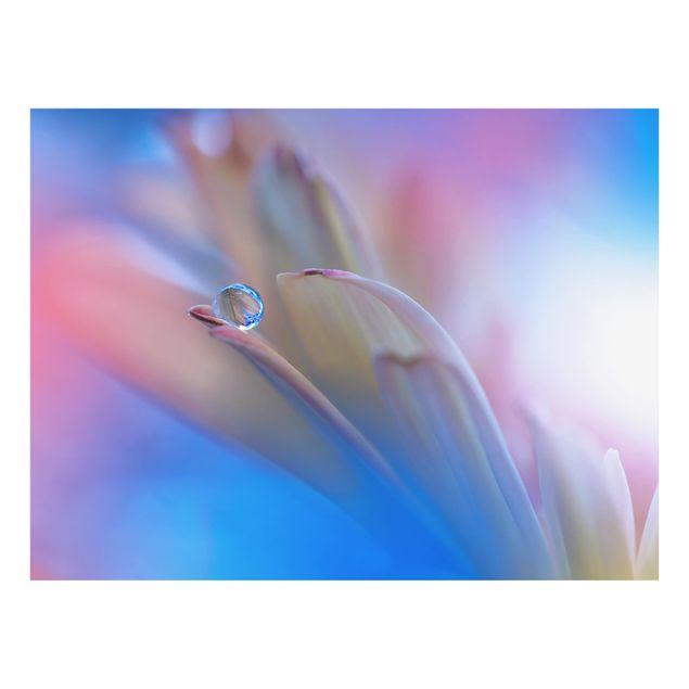 Glas Spritzschutz - Touch Me Softly - Querformat - 4:3
