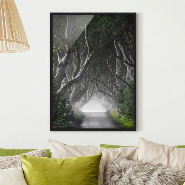 Bild mit Rahmen - Wald in Nordirland - Hochformat 3:4