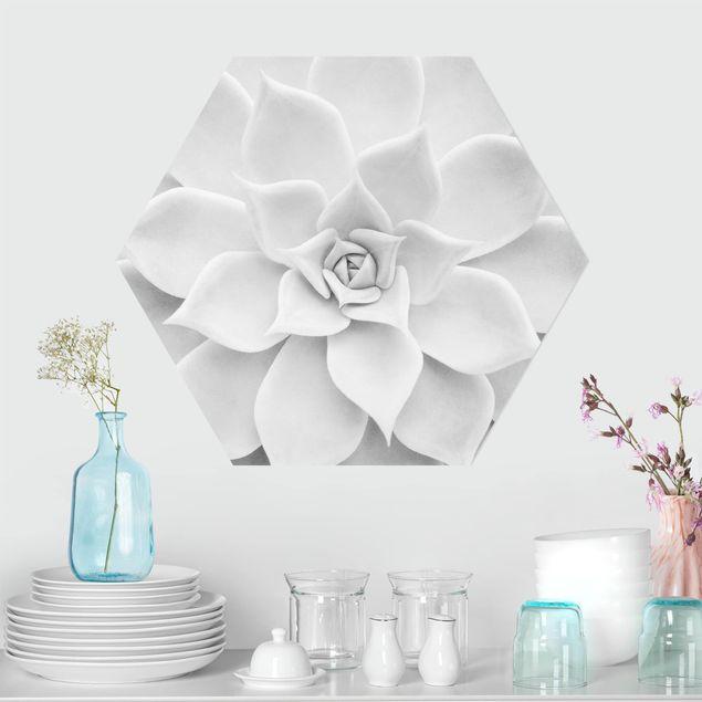 Hexagon Bild Forex - Kaktus Sukkulente