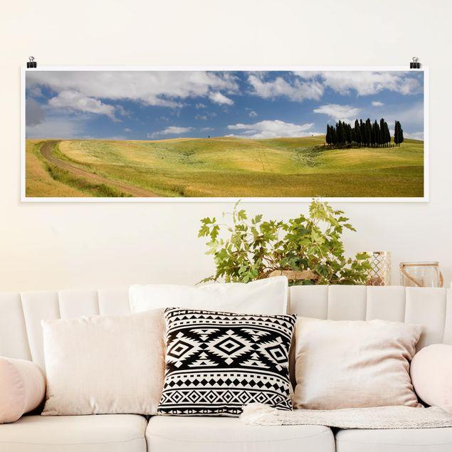 Poster - Zypressen in der Toskana - Panorama Querformat