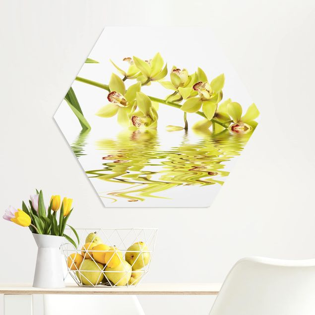 Hexagon Bild Forex - Elegant Orchid Waters