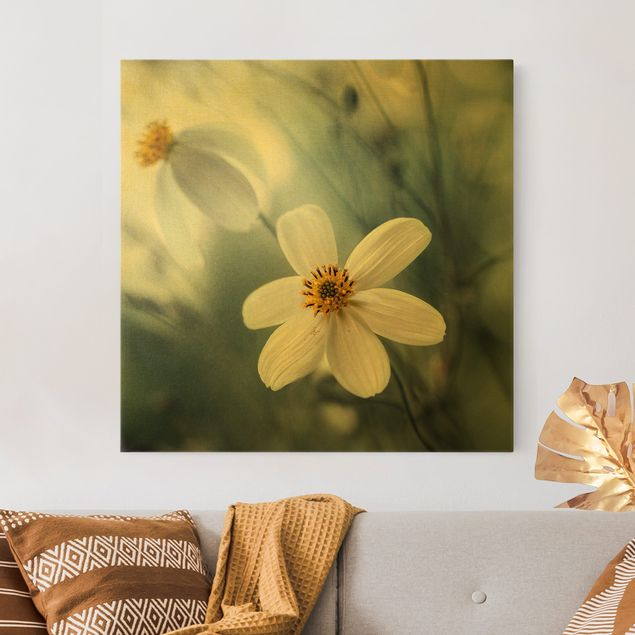 Leinwandbild Gold - Kosmeen in Pastell - Quadrat 1:1