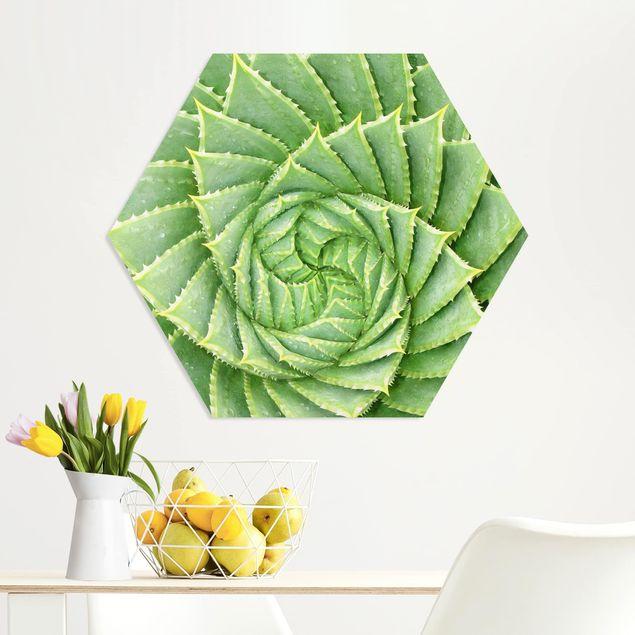 Hexagon Bild Forex - Spiral Aloe
