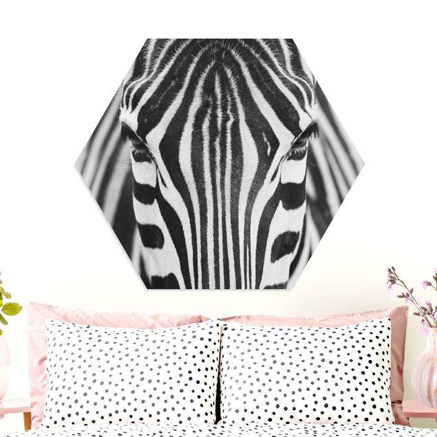 Hexagon Bild Forex - Zebra Look