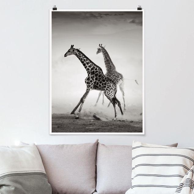 Poster - Giraffenjagd - Hochformat 3:4
