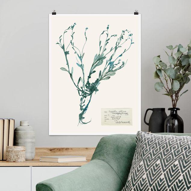 Poster - Gepresste Blumen - Vergissmeinnicht - Hochformat 3:4