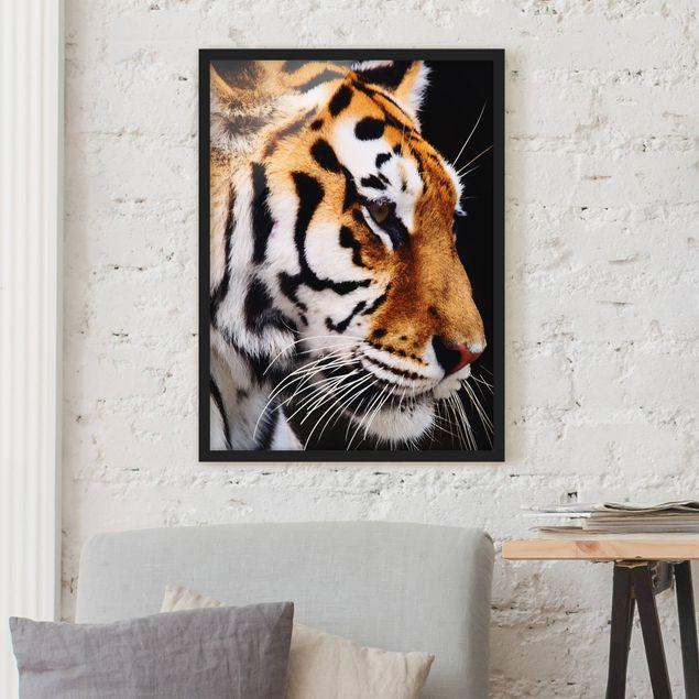 Bild mit Rahmen - Tiger Schönheit - Hochformat 3:4