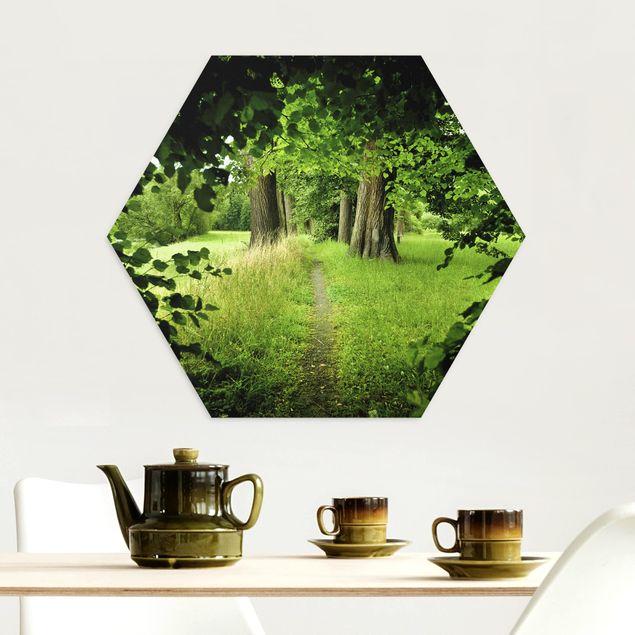 Hexagon Bild Alu-Dibond - Verborgene Lichtung