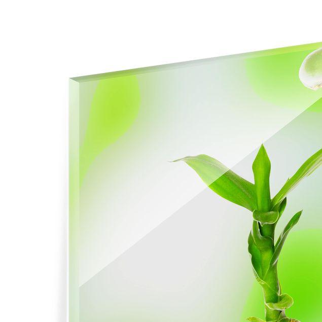 Glas Spritzschutz - Grüner Bambus - Quadrat - 1:1