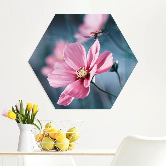 Hexagon Bild Forex - Marienkäfer beim Start