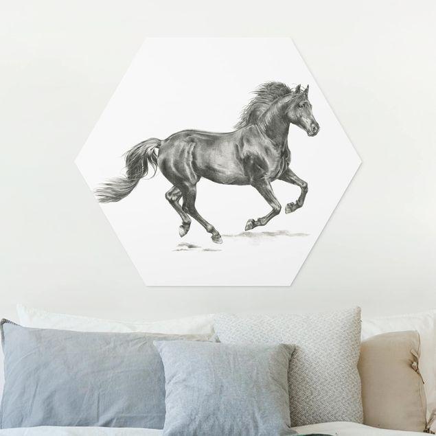 Hexagon Bild Forex - Wildpferd-Studie - Hengst