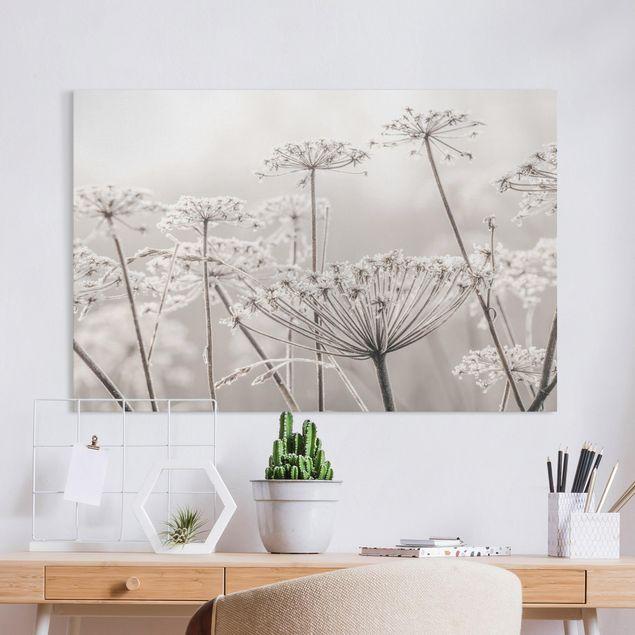 Leinwandbild - Doldenblüten im Frost - Querformat 3:2