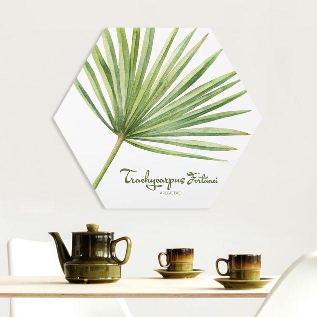 Hexagon Bild Forex - Aquarell Botanik Trachycarpus fortunei