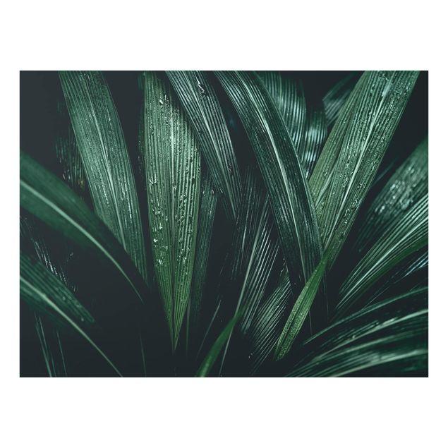 Glas Spritzschutz - Grüne Palmenblätter - Querformat - 4:3