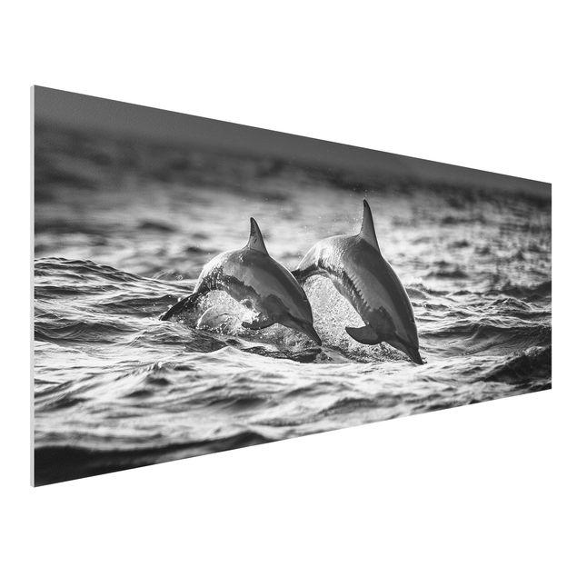 Forex Fine Art Print - Zwei springende Delfine - Panorama